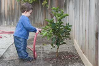 Young boy using a hose to water a newly planted tree