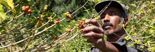 Migrant worker picking produce in the sun