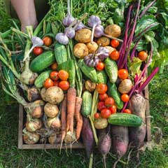 Freshly harvested garden produce in a wooden crate