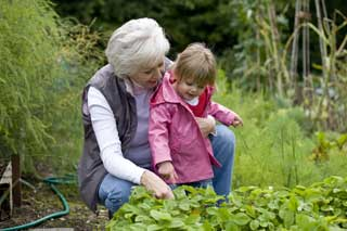 A young girl in a pink raincoat and her grandmother picking strawberries together