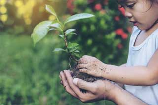 A small girl planting a tree with the help of her mother